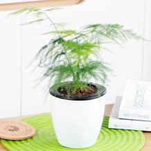 一宅一花 水培植物盆 多款可选