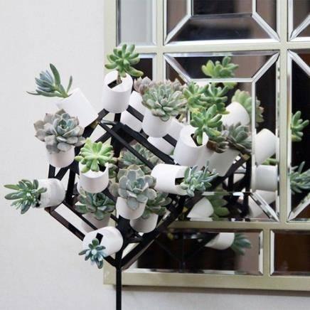 光合未来 PE磁吸式植物盆栽 15*4cm 多款可选 9.9元包邮(需用券)