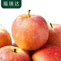 福瑞達 嘎啦蘋果 10斤 19.8元包郵(下單立減)
