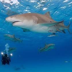 当地玩乐: 斐济 贝卡环礁 持证潜水(鲨鱼潜/珊瑚潜) 990元起/人