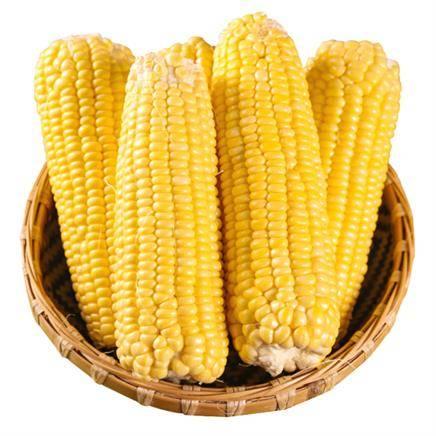水果蔬菜 云南新鲜水果玉米 5斤装 *2件    24.8元包邮(双重优惠,合12.4元/件)